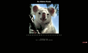 Koalas.org thumbnail