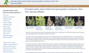 Syracusecannabis.tk thumbnail